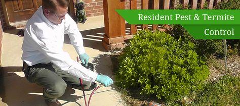 Termite Inspection, Treatment & Control